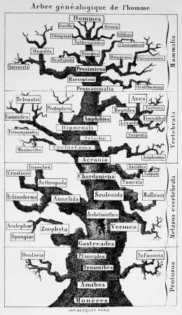 arbreHaeckel