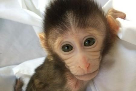 Creation-de-singes-transgeniques-autistes-pour-mieux-comprendre-ce-trouble_large_apimobile