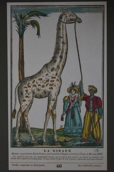 girafe_donnee_au_roi_de_france_par_le_pacha
