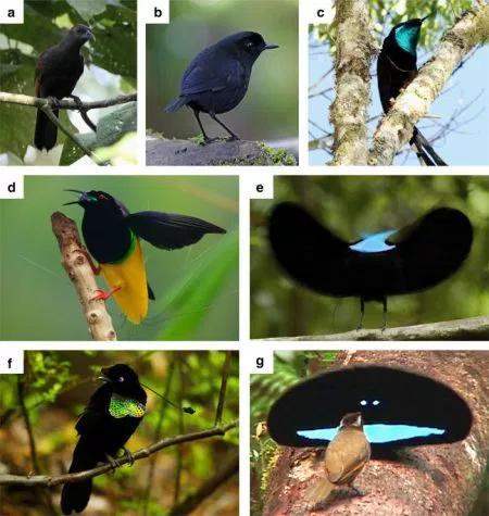 oiseauxliste