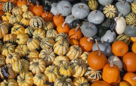1200px-Squashes_at_Kew_Gardens_IncrEdibles_2013